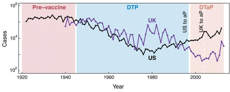 Pertussis cases in the United States from 1922 through 2012 and in the UK from 1940 through 2013. Shaded regions correspond to the pre-vaccine era, the DTP era, and the DTaP era, respectively. Credit: Courtesy of B. Althouse and S. Scarpin
