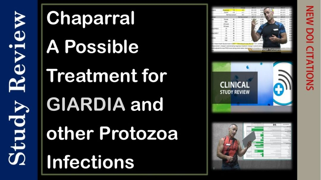 Chaparral maybe effective against Giardia and other